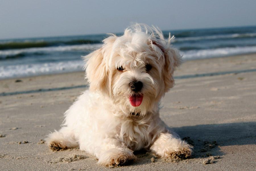 San Diego Dog Beach